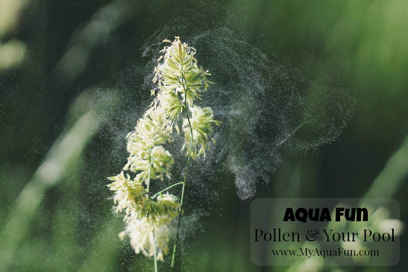 Pollen-Swimming-Pools-Aqua-Fun-Pool_Builder
